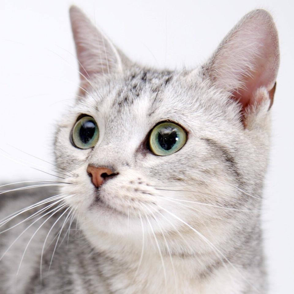 敗北陵辱好きな猫