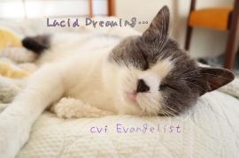 ASMR■Lucid Dreaming
