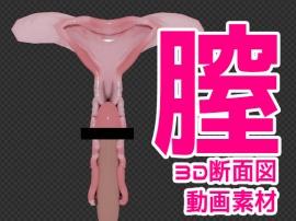 3DCG断面図動画素材Vol1