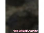 【シングル】THE ANIMUS/ぷりずむ
