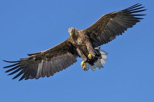 実況/空舞う自由と引き換えに、戦い生き抜く鷹になれ!