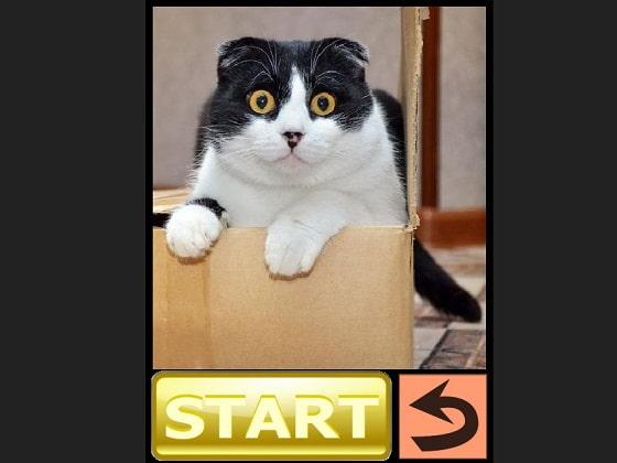 猫好きパズル